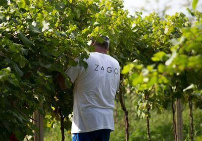 Zago - Prosecco