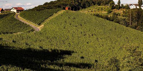 Weingut Sattlerhof - Gamlitz